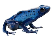 Blue and Black Spotted Frog Vinyl Decal