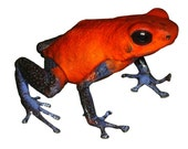 Red and Blue Frog Vinyl Decal
