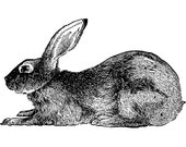 6 inch Rabbit at Rest Wall Decal
