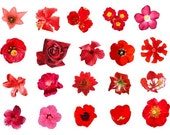 Cottage Garden Vinyl Decals - Flowers Butterflies and Praying Mantis