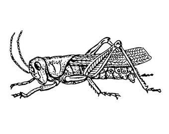 Etched Style Grasshopper Vinyl Decal