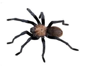 Giant Tarantula Spider Wall Decal