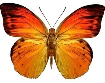 Bright Orange Butterfly Vinyl Decal