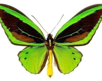 Bright Green Butterfly Vinyl Decal