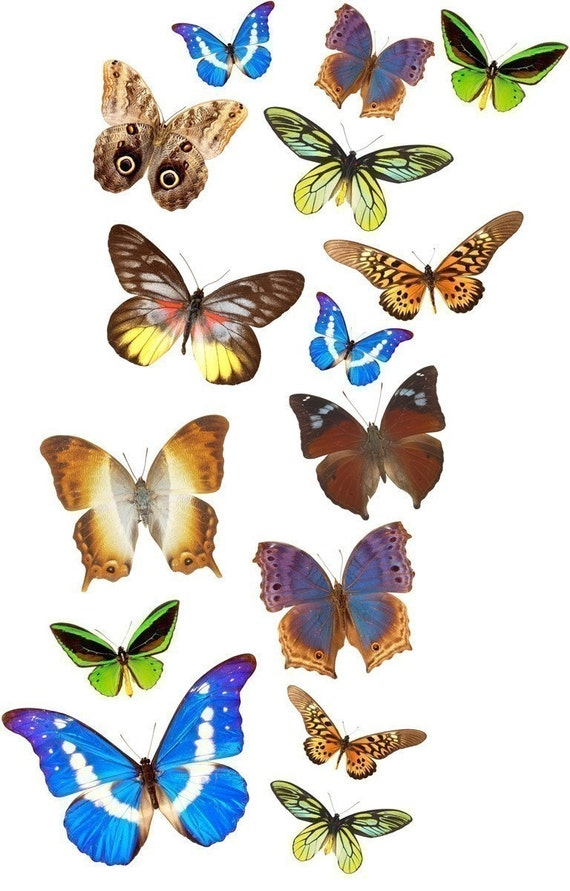 15 Vinyl Butterfly Decals for Decorating your Walls