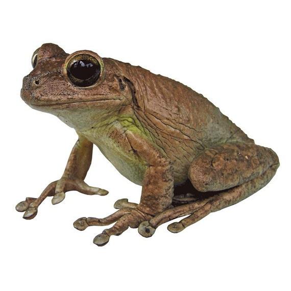 Cuban Tree Frog Vinyl Decal