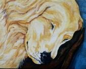 Sleeping Golden Retriever Original Painting by Artist Debra Alouise Puppy Dog Pet Portrait