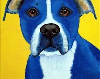 Blue American Pit Bull Terrier Fine Art Prints by Carol Iyer
