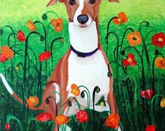 Wynston in Poppies, Italian Greyhound Dog Art, Fine Art Prints by Carol Iyer