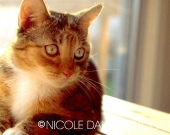 "Daydreaming Cat Fine Art Photography, Kitten, Animal, Tranquil, Calming, Relaxation, Sunshine, National Cat Day October 29-5"" x 7""or8"" x 10"""