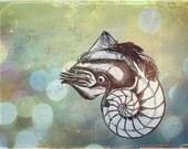 Nathan the Nautilus -- 8x10 print