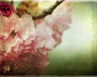 SALE - Spring Cherry Blossom -- 8x10 print