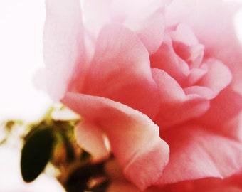 SALE - Perhaps A Flower -- 8x10 print