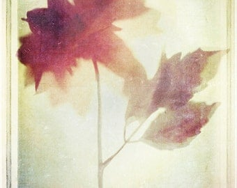 Flowers of Tomorrow's Happiness--  8x10 print