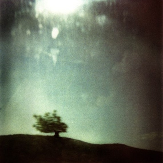 Fool on the Hill -- polaroid print