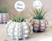 wedding place cards  // air plant party favors