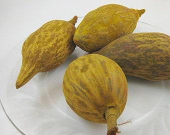 Yellow Baobab Pods for crafting, home decor, vase filler, bowl filler, basket filler