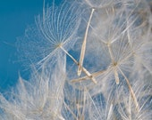 Make a Wish 8 x 10 Photographic Art Print