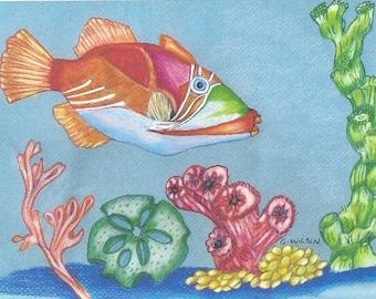 Tropical Fish and Sea Treasures