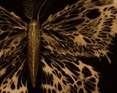 Skeletal Moth - reproduction of bleach painting