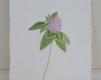 Red Clover Pink Flower Blossom Watercolor Botanical Original Painting
