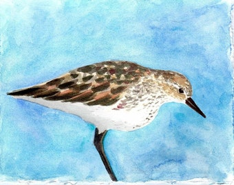 Shorebird Watercolor