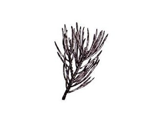 PINE BRANCH unmounted rubber stamp, Christmas, winter, gift tag stamp, forest, nature, pinecone, Sweet Grass Stamps No.19