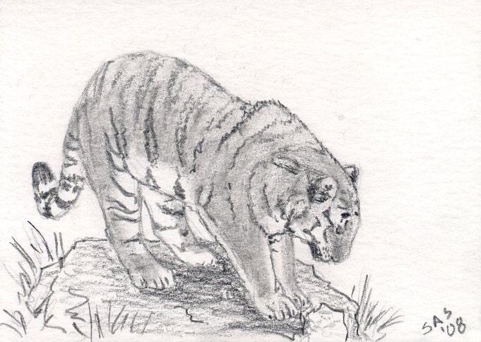 Wild Animal Sketches Wild Animal...681
