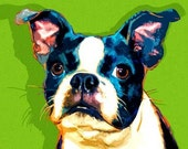 Boston Terrier Print Buster on Lime Green