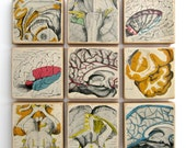 Anatomy of the Brain - Set of 9 EPHEMERA ART BLOCKS - 1937 Medical Anatomy Illustration