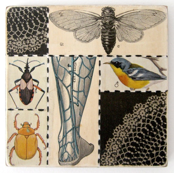 Bricolage no 65 (with insects) - Original Mixed Media COLLAGE on Panel - FREE SHIPPING