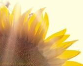 fine art flower photography yellow flower sunlight wall art home decor Sunflower 8x12 IN STOCK