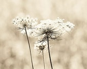 Queen Anne's Lace photography fine art flower photography queen annes lace flower photograph collection white decor gift set of three