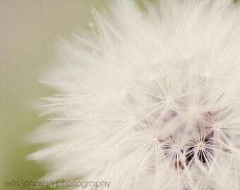 dandelion photography, white home decor, flower photograph, spring art, nature photograph, macro, nursery wall art, Dandelion Dreams