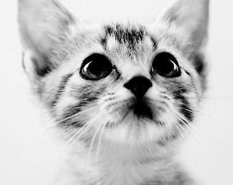baby animal photography, cat, black and white art, kitten, nursery decor, kitten photo, Sweet Kitten