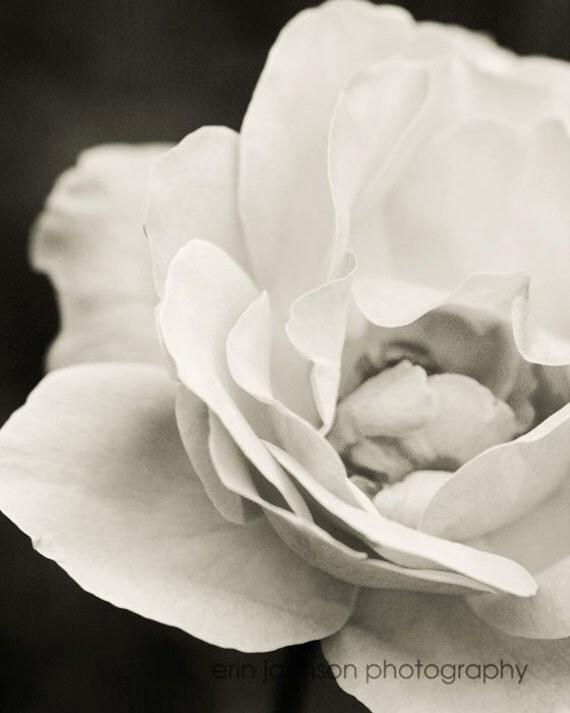 black and white flower photography, rose photography, fine art, nature, macro, romantic decor, Vanilla Rose