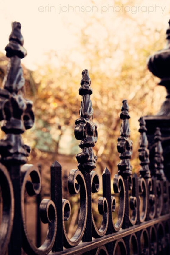 New Orleans Photography Garden District Wrought Iron Fence