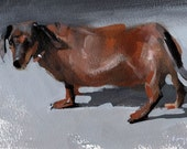 Animal Print Dog Art Dachshund - Dachshund by David Lloyd