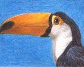 Toucan - Original Coloured Pencil ACEO