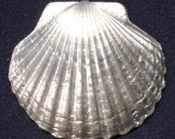 Large Scallop Shell