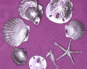 Small Shell Collection
