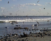 Seagulls & Shells, 4 x 6 matted to 8 x 10