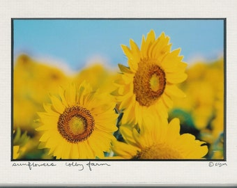 680 5x7 Matted Art Sunflower Sunflowers - 680