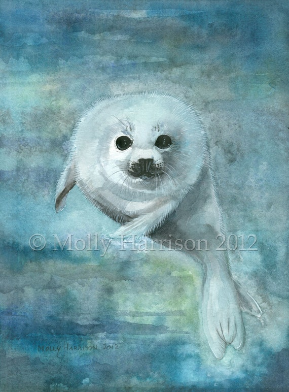 Arctic Swimmer - Harp Seal - Fine Art Archival Giclee Print by Molly Harrison