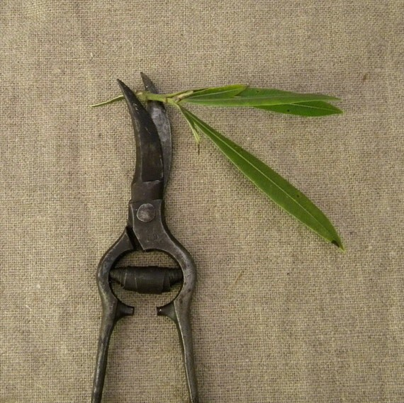 Vintage French country secateurs or scissors