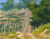 Road Beside The Vineyard - A Study of a Tuscan Vineyard - Sized 8 x 6