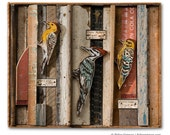 Woodpecker Art Assemblage Faux Taxidermy Birds