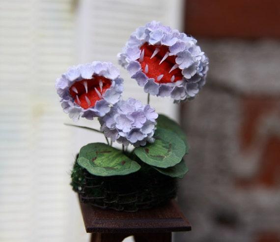 Miniature Fanged Geranium