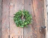 BOXWOOD mini  WREATH  fresh holiday greenery