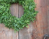 BOXWOOD WREATH smaller size for fresh holiday decorating